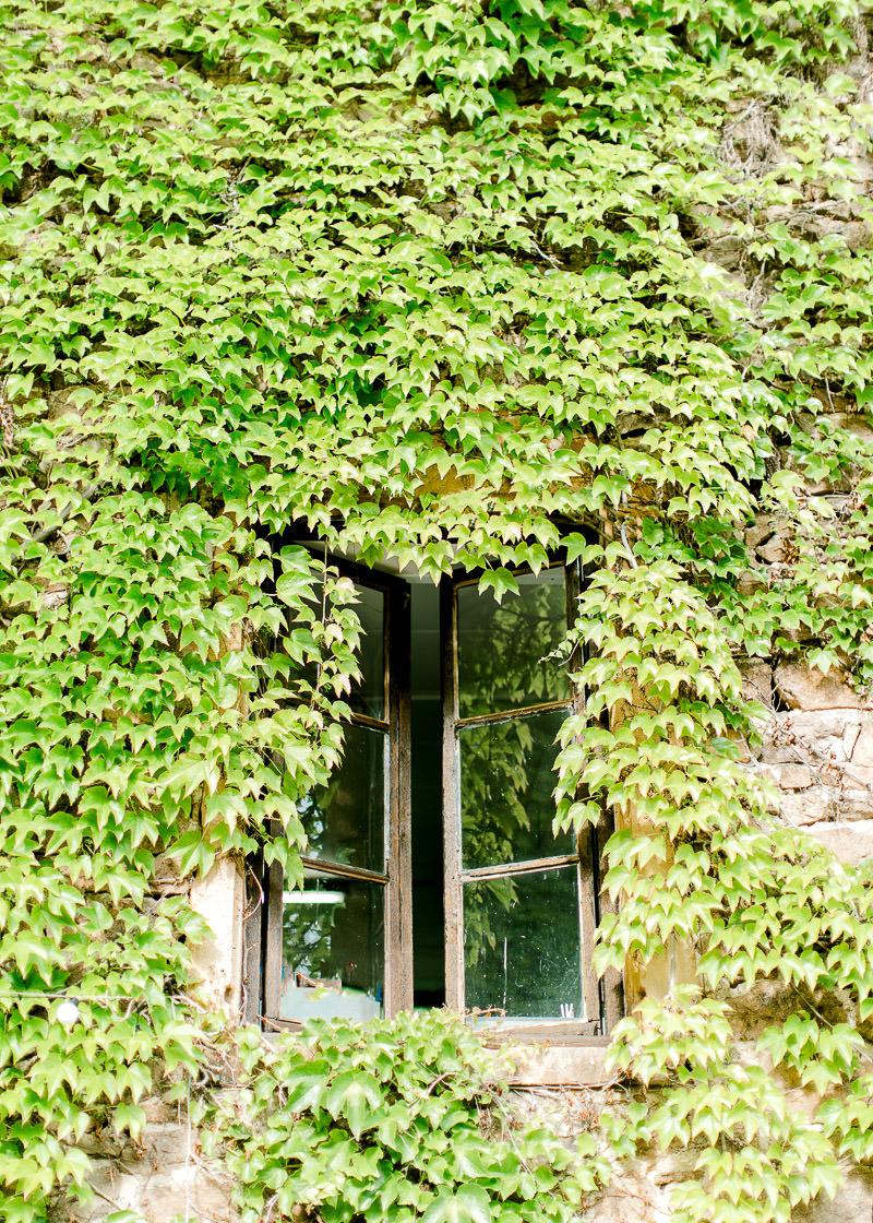 Fenêtre caché par du lierre au domaine de la Genetière
