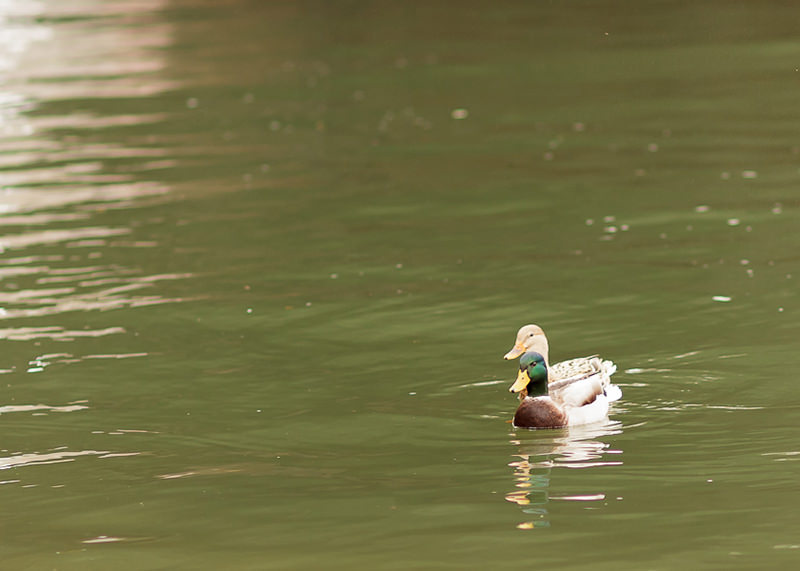 Photographe famille Lyon - Animaux sur l'eau