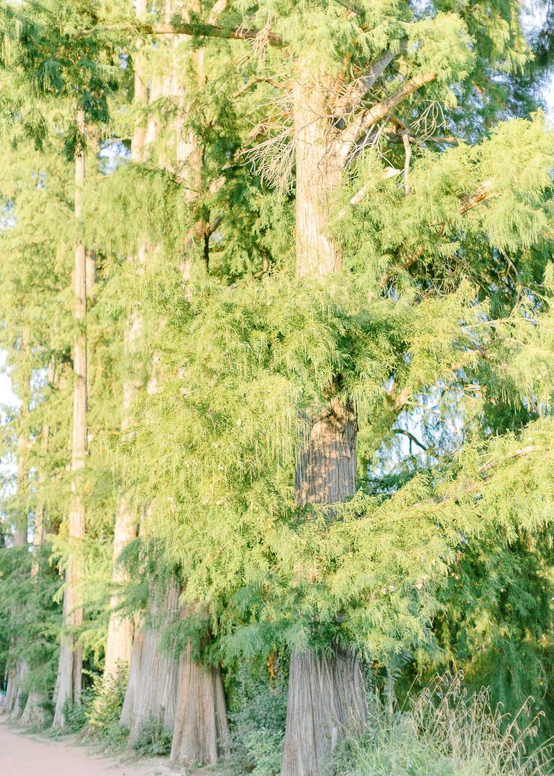 Grand arbre du parc têt d'or à Lyon